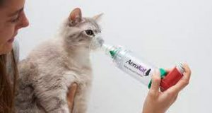 Would An Air Purifier Help My Cat That Has Asthma